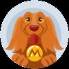 Monty 2-year-old dachshund